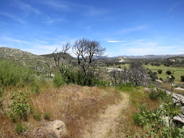 Between Campo and Lake Morena - Pacific Crest Trail