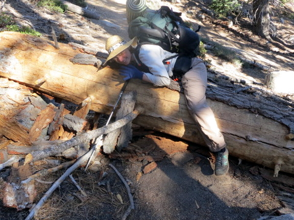 Log Rolling - Pacific Crest Trail