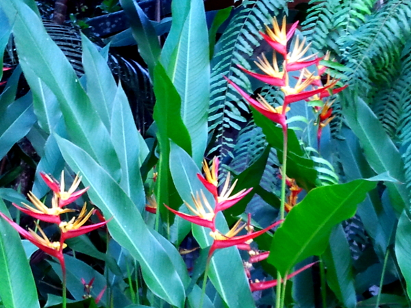 Heliconia - Our Jungle Huts - Khlong Sok - Thailand