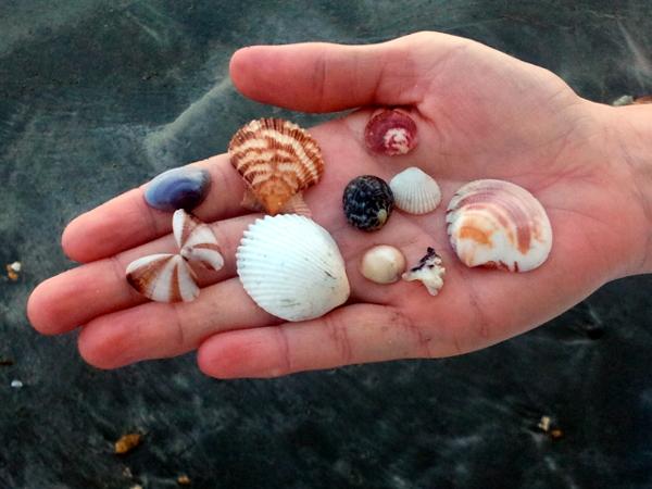 Seashells - Little Koh Chang - Thailand