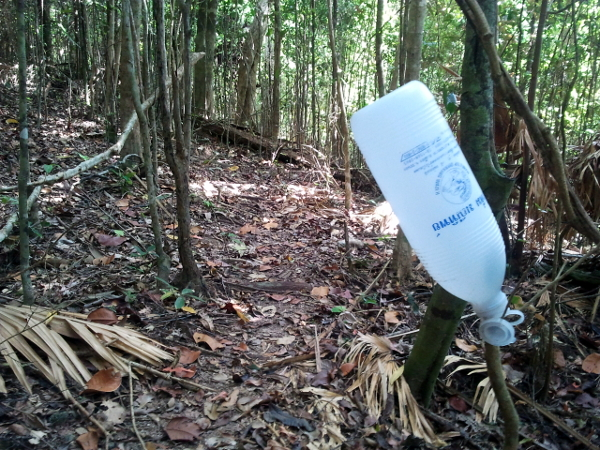 Tapping Rubber - Little Koh Chang - Thailand