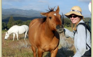 Horse Friends on the Pacific Crest Trail