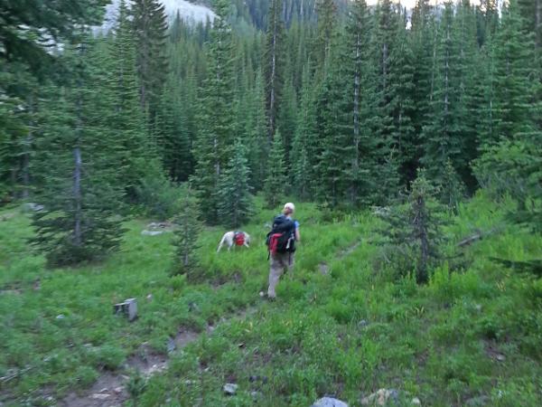 Trail to Emerald Park 3 - North Cascades