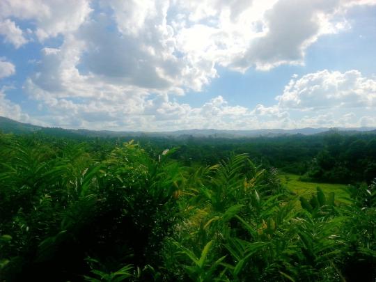 Rural Countryside - RN2 - Madagascar