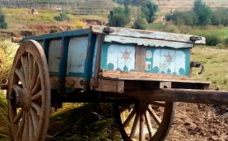 Ox Cart - Antsirabe - Madagascar
